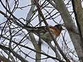 A little reddish bird on the tree.jpg