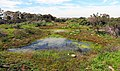 A network of vernal pools flow between mima mounds (32515945633).jpg