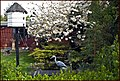 A riverside garden nr. Shepperton Lock. - panoramio.jpg