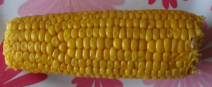 Aa maize ear irregular 01