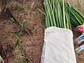 Aboriginal fibre weaving materials.jpg