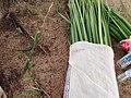 Aboriginal fibre weaving materials.jpg