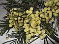 Acacia mearnsii-4-sanyasi mallai-yercaud-salem-India.JPG