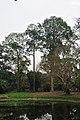 Acharya Jagadish Chandra Bose Indian Botanic Garden - Howrah 2011-02-20 1567.JPG