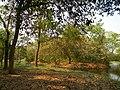 Acharya Jagadish Chandra Bose Indian Botanic Garden - Howrah 2011-03-20 2014.JPG