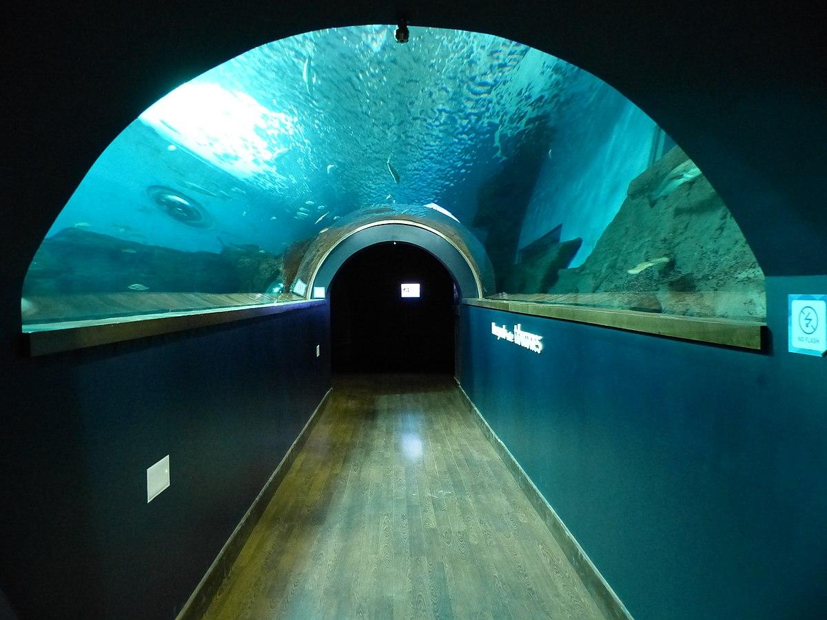 Acuario de sevilla wikipedia la enciclopedia libre - Entradas acuario sevilla ...