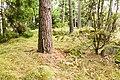 Adelsö 94-1.jpg