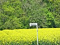 Ahlen, Germany - panoramio (55).jpg