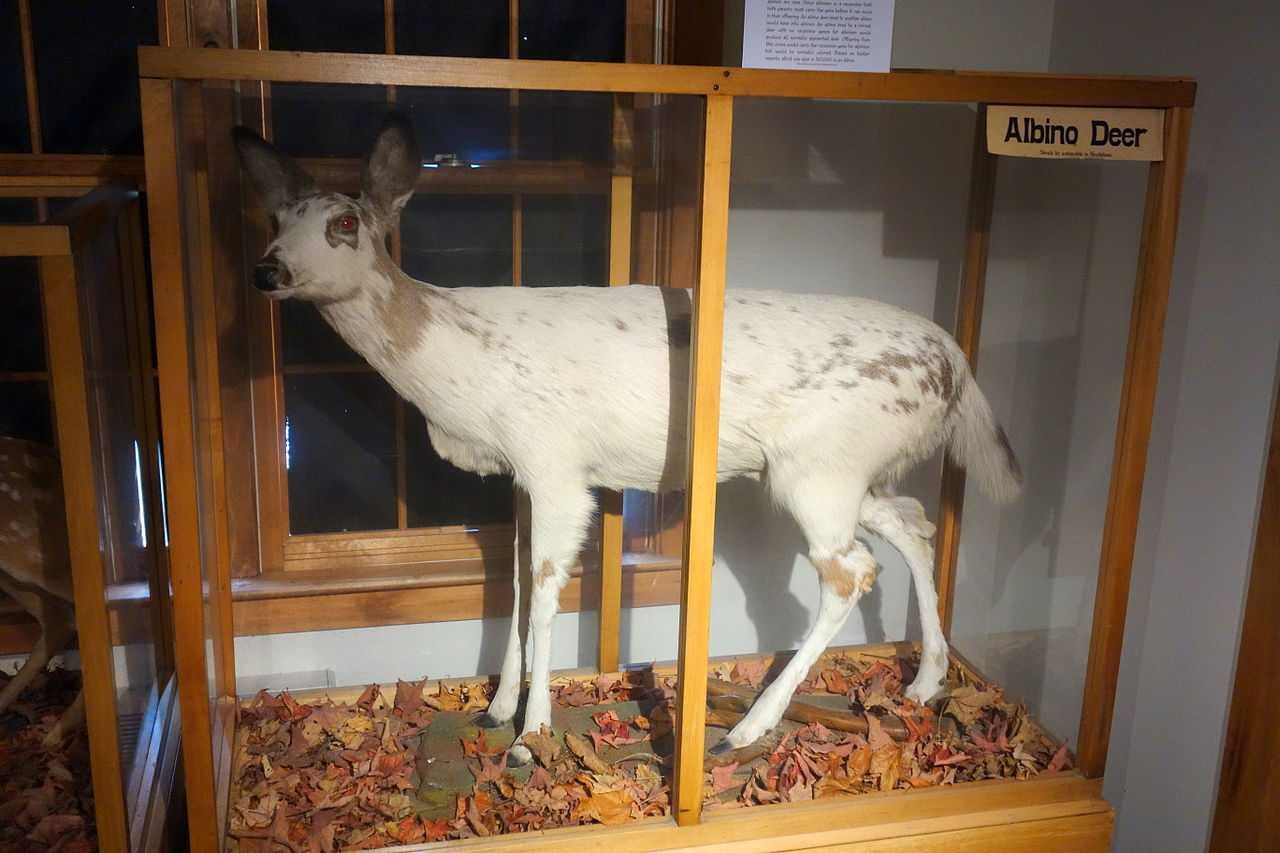 Southern Vermont Natural History Museum Marlboro