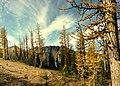 Alpine Autumn Splendor (176303945).jpeg