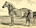 American horses and horse breeding - a complete history of the horse from the remotest period in his history to date. The horseman's encyclopedia and standard authority on horses, embracing breeds, (14784930625).jpg