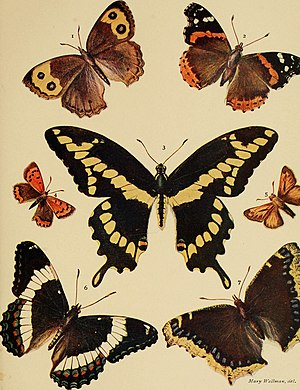 American insects (1904) (18152404571).jpg