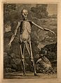 An écorché figure, front view, with left arm extended, Wellcome V0008354.jpg