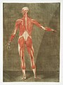 Anatomical illustration by Arnauld-Eloi Gautier-Dagoty , digitally enhanced by rawpixel-com 7.jpg