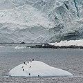 Antarctica - panoramio (95).jpg