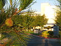 Antelope Valley Hospital (2954172935).jpg