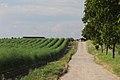 Aparagus hills - panoramio.jpg