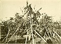 Apple growing in the Pacific Northwest; a condensation of lectures, experiments and discussions (1911) (14597328548).jpg