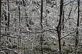 Apple trees covered with ice.JPG