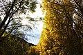 Arboles - panoramio (4).jpg