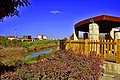 Arbor in Ashdod. - panoramio.jpg