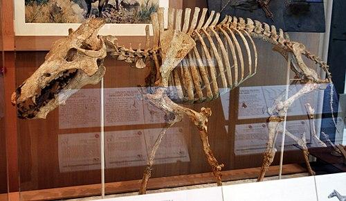 Archaeotherium