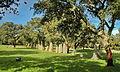 Area archeologica di Pranu Muttedu - Menhir 01.jpg