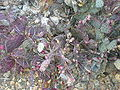 Arizona Cactus Garden 031.JPG