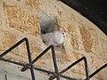 Armenian quarter tour DSCN3316.jpg