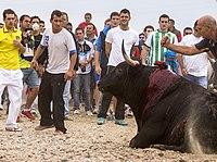 Asesinato de Elegido, Toro de la Vega 2014 (7).jpg