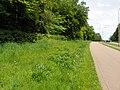 Ashtree Wood roadside verge, Stevenage (8876836774).jpg