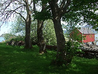 Steigen - Part of the old garden at Løvøy