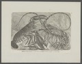 Astacus marinus - - Print - Iconographia Zoologica - Special Collections University of Amsterdam - UBAINV0274 097 01 0014.tif