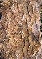 Asymmetrical ripple marks in quartzite (Baraboo Quartzite, upper Paleoproterozoic, ~1.7 Ga; southern shore of Devil's Lake, Devil's Lake State Park, Wisconsin, USA) 6 (18817680902).jpg