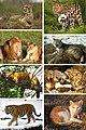 Auswahl Katzen 8er.jpg