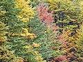 Autumn (180530179).jpeg