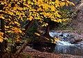 Autumn Pool (266828754).jpg