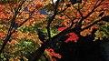 Autumn red - panoramio (8).jpg