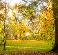 Autumn scene at Woodleigh (2 of 7).jpg