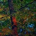 Bäume spiegeln sich im Wasser.jpg