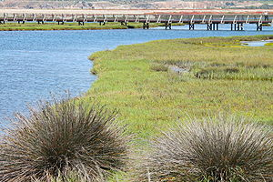 Bolsa Chica Ecological Reserve - A southerly view toward the footbridge