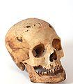 BMVB - crani - núm. 3978.JPG