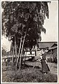 Babysitter under bamboo tree in Japan (1914 by Elstner Hilton).jpg