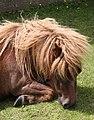 Bad hair day - Flickr - exfordy.jpg