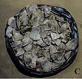 Bag of pangolin scales intended for commercial sale - oo 246940 (cropped to C).jpg