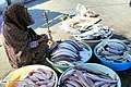 Bandar Abbas Fish Market 2020-01-22 25.jpg