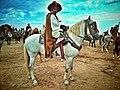 Barbe horse.jpg