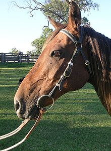 220px Barcoo_bridle bridle wikipedia