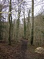 Bardolph's Wood - geograph.org.uk - 348408.jpg