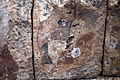 Basilica Complex, Qanawat (قنوات), Syria - West part- remains of geometric wall painting on western conch of adyton - PHBZ024 2016 3561 - Dumbarton Oaks.jpg
